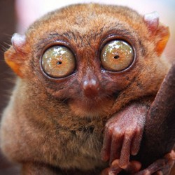 Profilový obrázek Kluk ze zoo