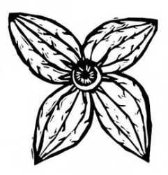 Profilový obrázek Wraní woko