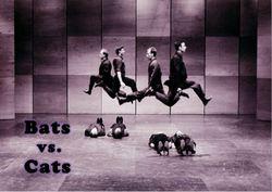 Profilový obrázek Bats vs Cats