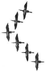 Profilový obrázek Tažní ptáci