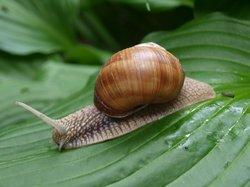 Profilový obrázek Snail