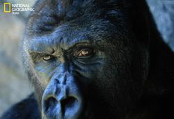 Profilový obrázek Ken Freud