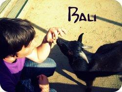 Profilový obrázek Bali