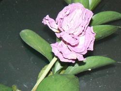 Profilový obrázek Tejllor