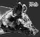 Profilový obrázek Black Swine