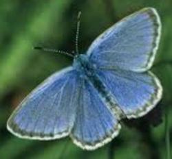 Profilový obrázek Alcon Blue