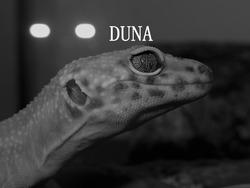 Profilový obrázek DUNA