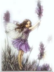 Profilový obrázek Shadows of lavender
