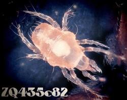 Profilový obrázek ZQ435c82