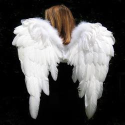 Profilový obrázek Wings of Time