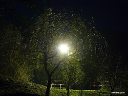 Profilový obrázek Nočný spoj