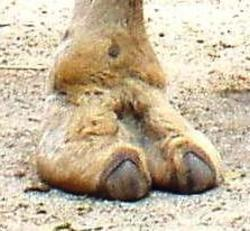 Profilový obrázek Camel Toe