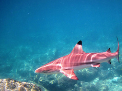 Profilový obrázek Pink Tiburon