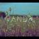 Profilový obrázek VANDA
