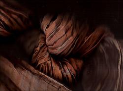 Profilový obrázek Brown silk tones