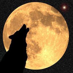 Profilový obrázek Dj wlk