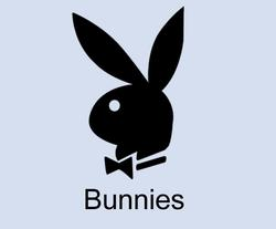 Profilový obrázek Bunnies