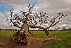 Profilový obrázek Fallen tree