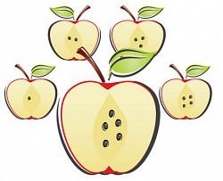 Profilový obrázek Apple Seeds