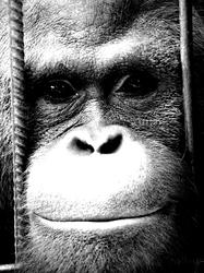 Profilový obrázek Lesapan