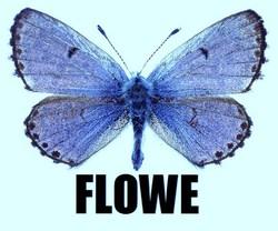 Profilový obrázek flowe