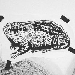 Profilový obrázek Toad