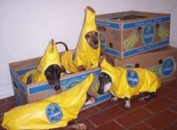 Profilový obrázek Banáni