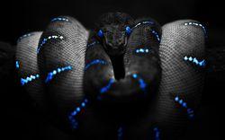 Profilový obrázek Blacksnake