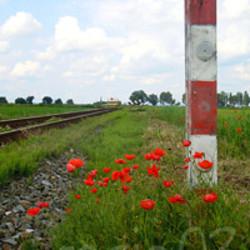 Profilový obrázek Poppy fields