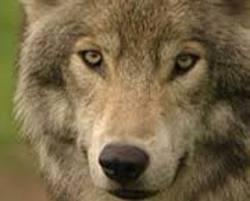Profilový obrázek johnny smallwolf band