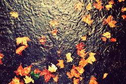 Profilový obrázek Morning Fall Thing
