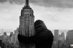 Profilový obrázek The Empire States Buildings's