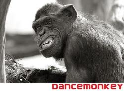 Profilový obrázek Dancemonkey