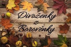 Profilový obrázek Divoženky z Borověnky