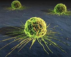 Profilový obrázek Fragile Immunity