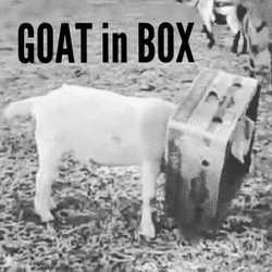 Profilový obrázek Goat in Box.