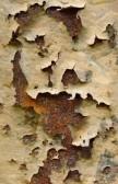 Profilový obrázek to co zbylo po houbovce a spídojácích