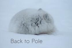 Profilový obrázek Back to Pole
