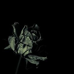 Profilový obrázek Flowers by Juliet