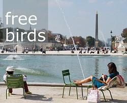 Profilový obrázek Free birds
