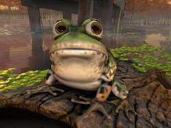 Profilový obrázek Froggie & Wyckie