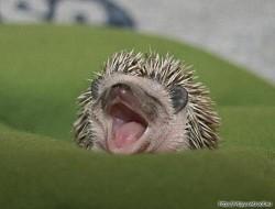 Profilový obrázek hadgehog