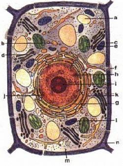 Profilový obrázek (H)AlfaNGell 666/999