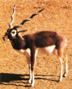 Profilový obrázek Hardcore Animal