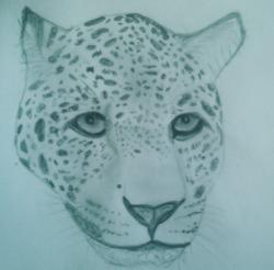Profilový obrázek Jaguar