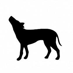 Profilový obrázek Kojot
