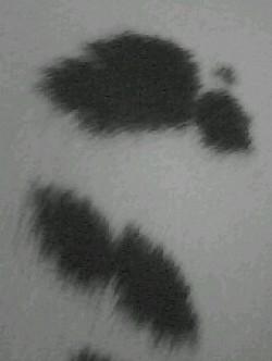 Profilový obrázek KUMRAL ROCCO