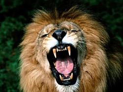 Profilový obrázek Lev