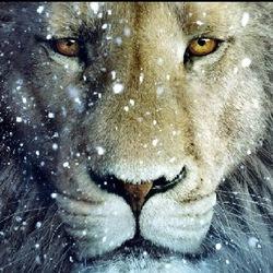 Profilový obrázek LEvo