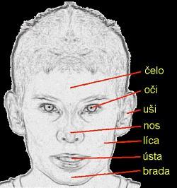 Profilový obrázek Medo94